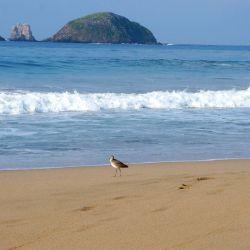 Playa La Escollera Ave Paseando Playa Las Escolleras Ixtapa Zihuatanejo