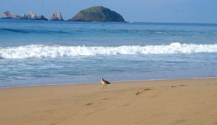 Ave Paseando Playa Las Escolleras Ixtapa Zihuatanejo
