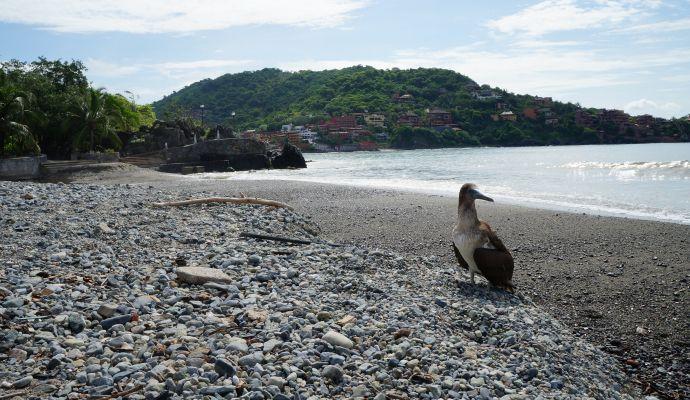 Vida En Playa Principal Zihuatanejo