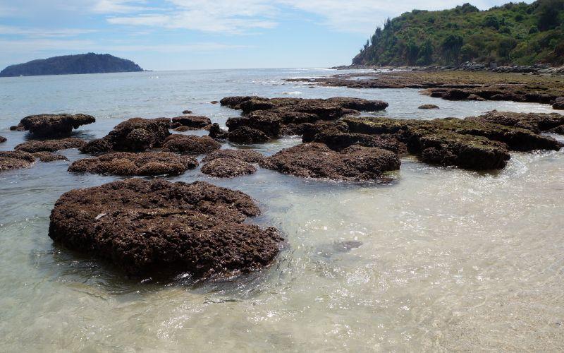 Coral En La Isla De Ixtapa